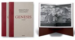 salgado-genesis
